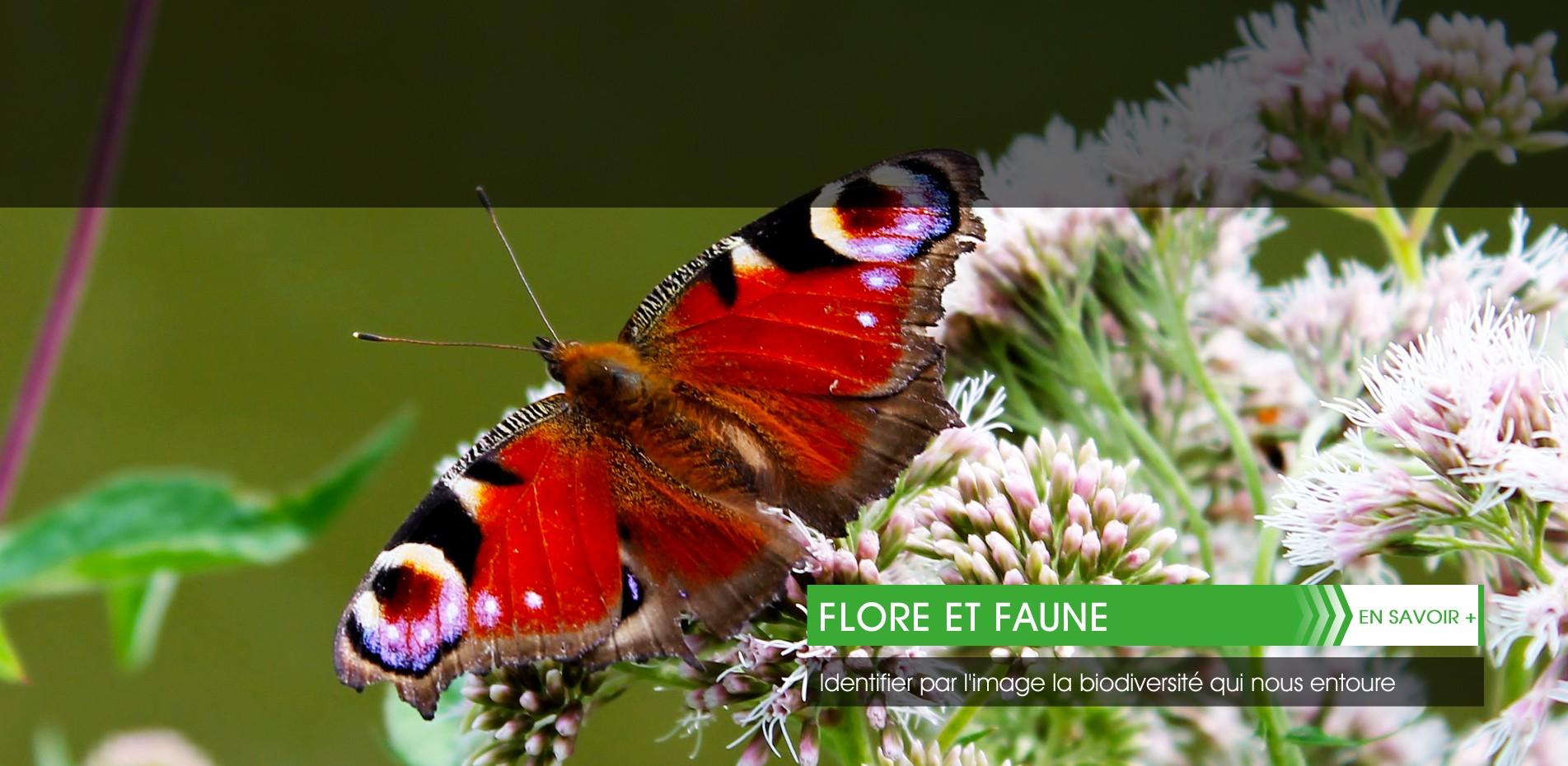 flore-et-faune